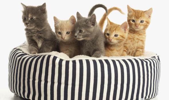 8 Tips Memberi Makan Kucing
