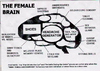 the female brain picture