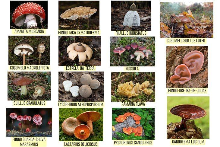 15-fungos-comuns-no-Brasil