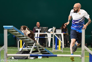 Sarà un cesenate a difendere l'Italia ai mondiali di agility-dog