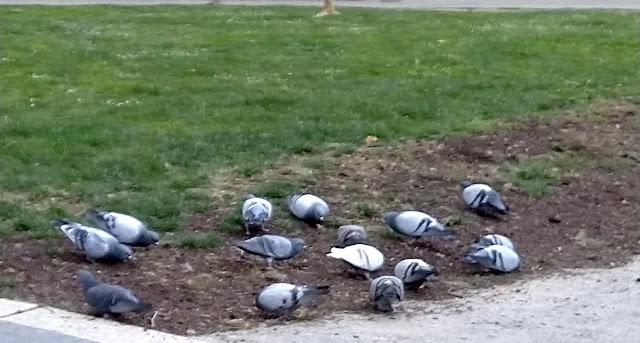 Las palomas en el parque de los Hermanos