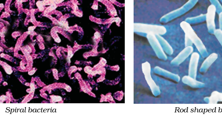 Notes of Ch 2 Microorganisms: Friend and Foe| Class 8th