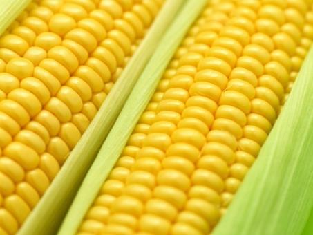 """Resultado de imagem para Um fazendeiro que venceu o prêmio """"milho-crescido"""""""
