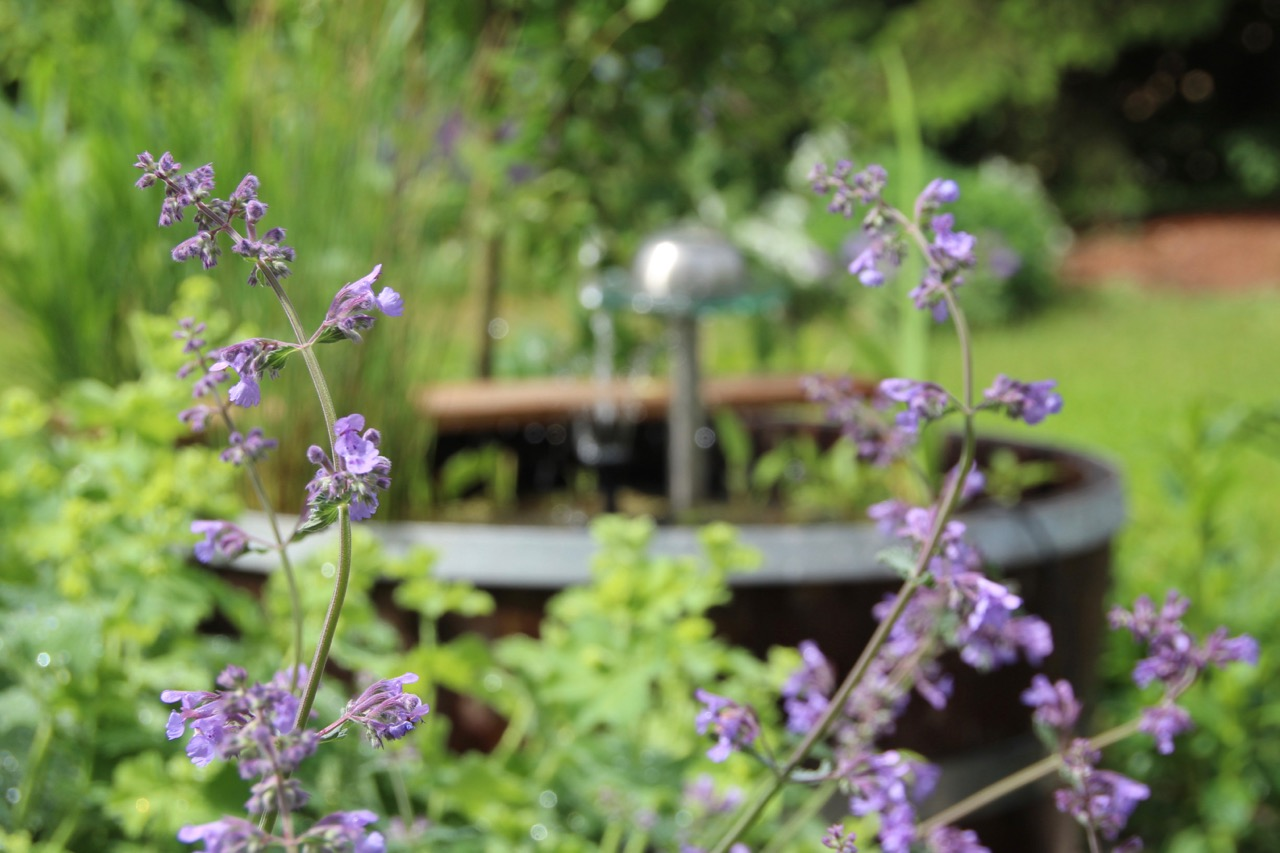 Der miniteich im vierten jahr bergblumengarten for Miniteich winter