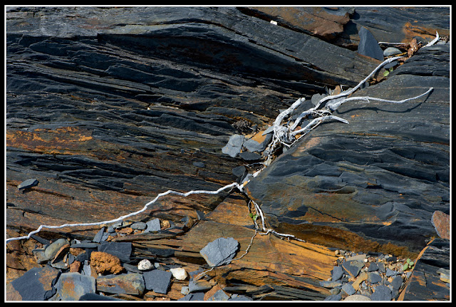 Nova Scotia; Gaff Point; Rocks; Roots
