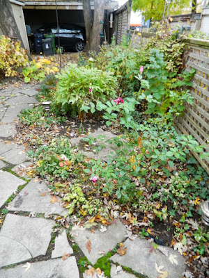 Toronto Leslieville Backyard Garden Fall Clean up before by Paul Jung Gardening Services