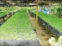Peluang Budidaya Sayuran Yang Menjanjikan