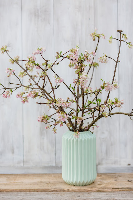 Duftschneeball, Friday Flowerday, Pomponetti