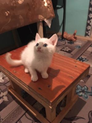 Котенок Феликс