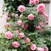 Sunday Flowers #233