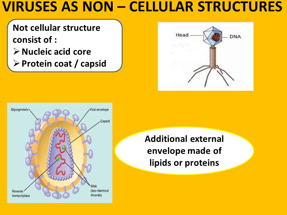 cell structure 1 Cell and cell structure comes with three main menu options: ¨ all about cells ¨ interactive all about cells offers you an in-depth understanding about cells, cell structure, the cell life cycle, individual.