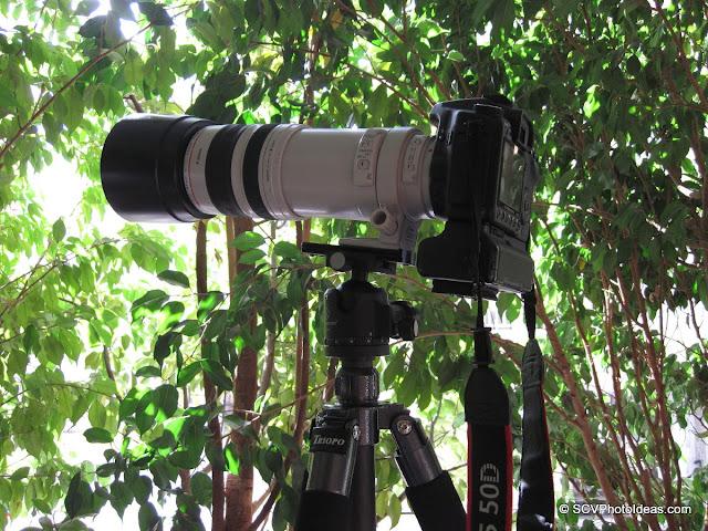 Canon EOS50D+BG-E2N+EF100-400L IS USM + Sunwayfoto XB-44 head on Triopo GX-1328 CF Tripod