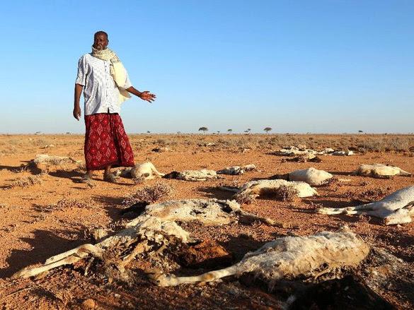 Jutaan Jiwa Penduduk Somalia Terancam Kelaparan, Mari Bergerak bersama ACT!
