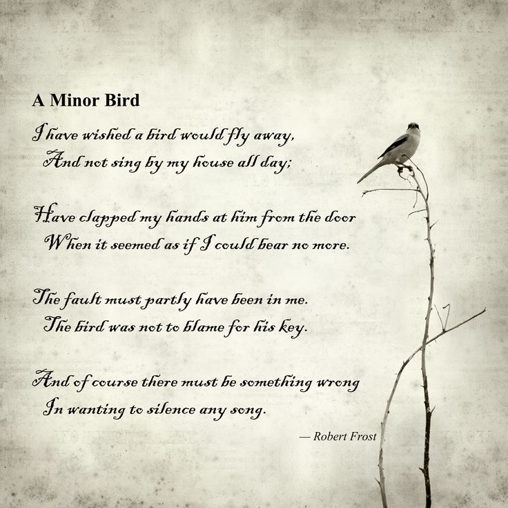 Puisi A Minor Bird By Robert Frost Terjemahan Dan Analisisnya