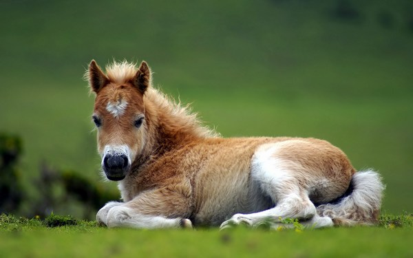 Pictures of Baby Horse Sitting on the Ground