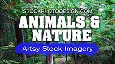 https://stockphotodesign.com/animals-nature/
