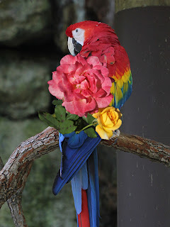 Roses on Macaw