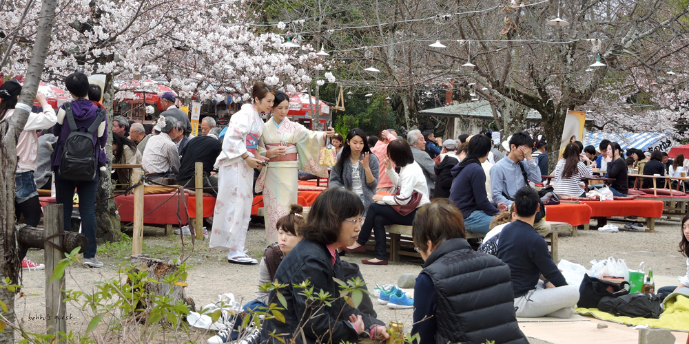 Hanami during sakura season in Kyoto by betitusquest
