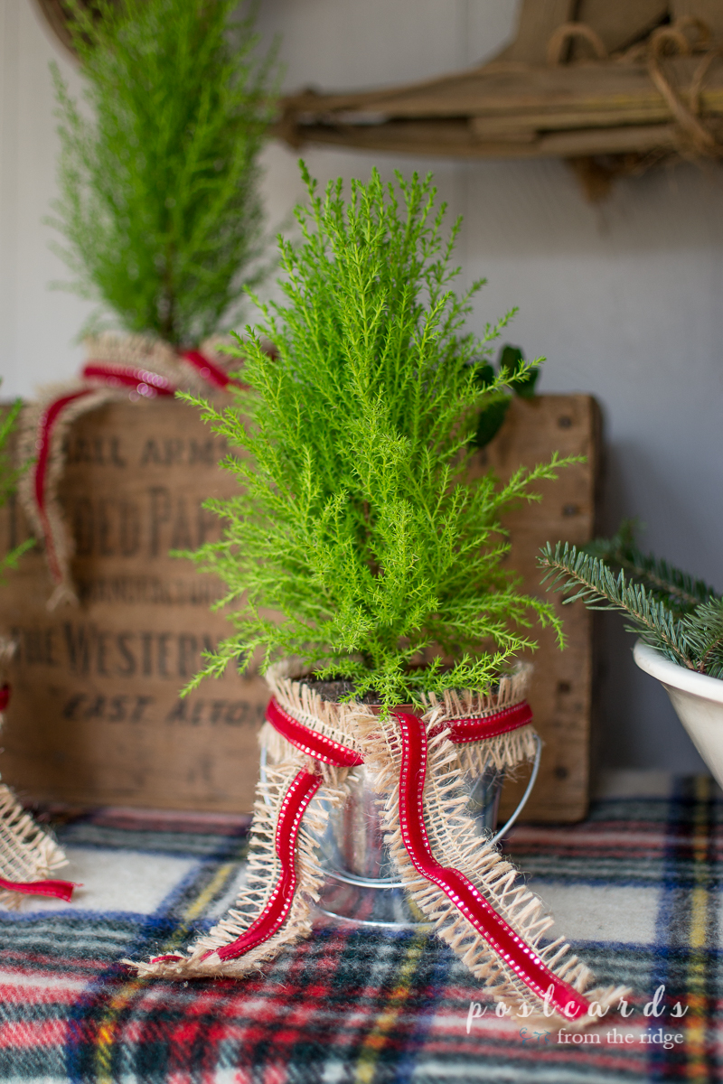 Love the little trees! Many other pretty ideas for Christmas porch decorating on this site.