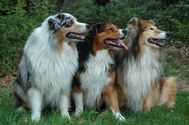 Jak określić wiek psa?