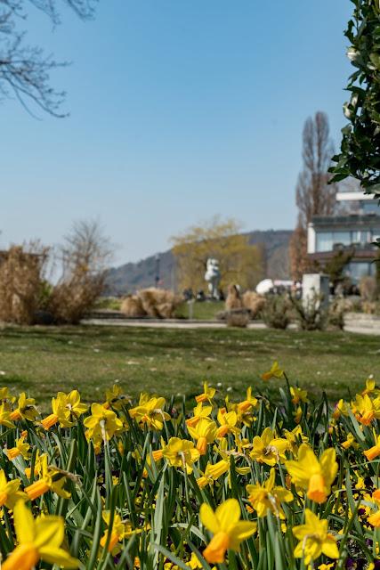 Wandern Konstanz Bodensee SeeGang Etappe 3 - Riedwiesen und Steiluferlandschaften am Überlinger See: Von Bodman durchs Aachried nach Ludwigshafen und auf dem Blütenweg nach Sipplingen 9