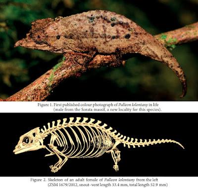 Species New to Science: [Herpetology • 2013] Palleon gen