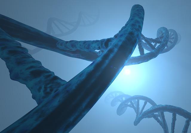 Relation entre le gène nouvellement découvert et le diabète de type 1