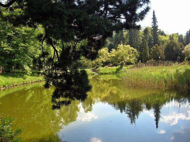 Kórnik, arboretum, drzewa, park
