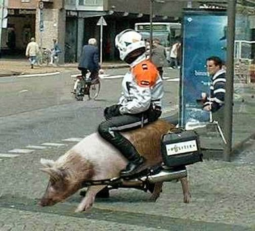 Foto graciosa de un cerdo