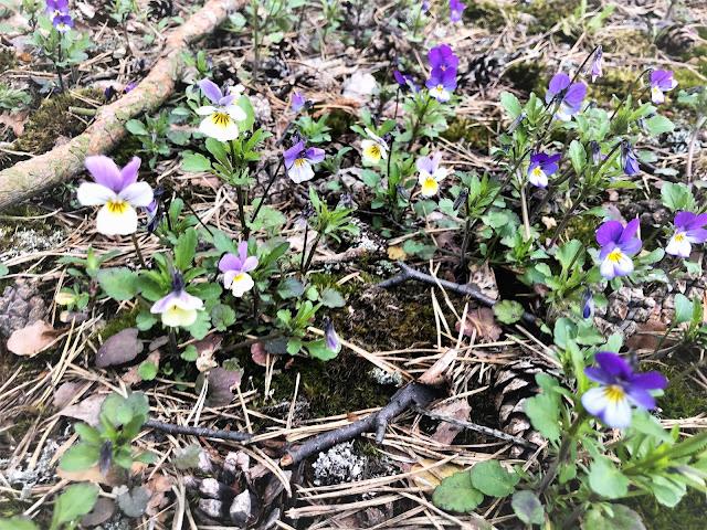 kukat kuivamaaperä