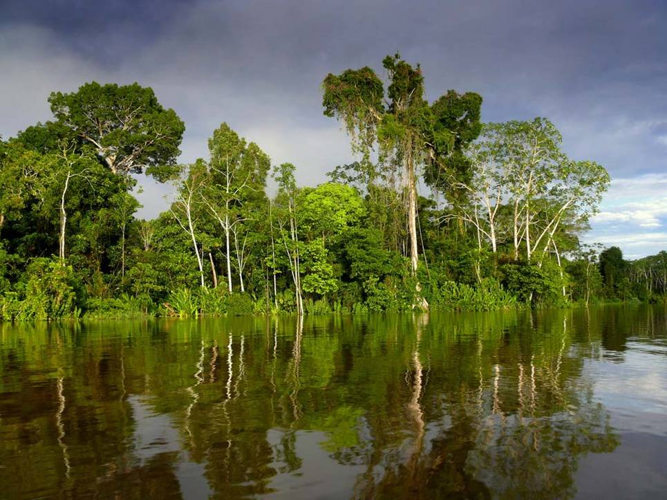 Best WallPapers: The Amazon The Greatest River Wallpapers