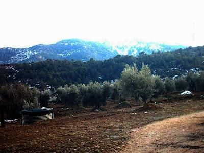 los olivares ,camino ,pantano de Pena, Beceite, Beseit, depósito