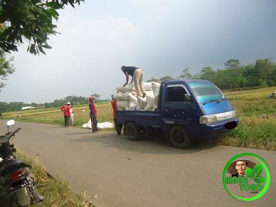 FOTO : Melakukan mobilisasi hasil panen ... hehehe.