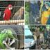 ஹாலி குவின் மெக்கோ உட்பட 50 இலட்சம் ரூபா பெறுமதியுடைய பறவைகள் சிக்கின.