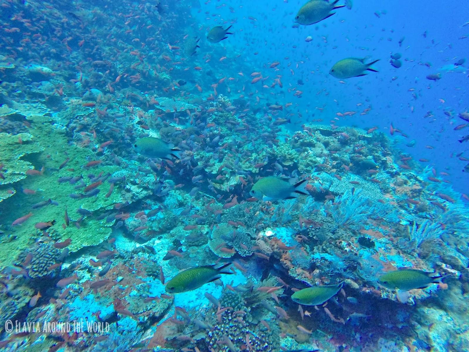 Bajo el mar en Komodo
