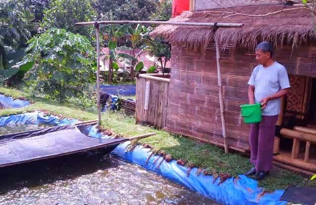 http://lele-55panen.blogspot.com/2014/10/dampak-air-hujan-bagi-ikan-lele.html