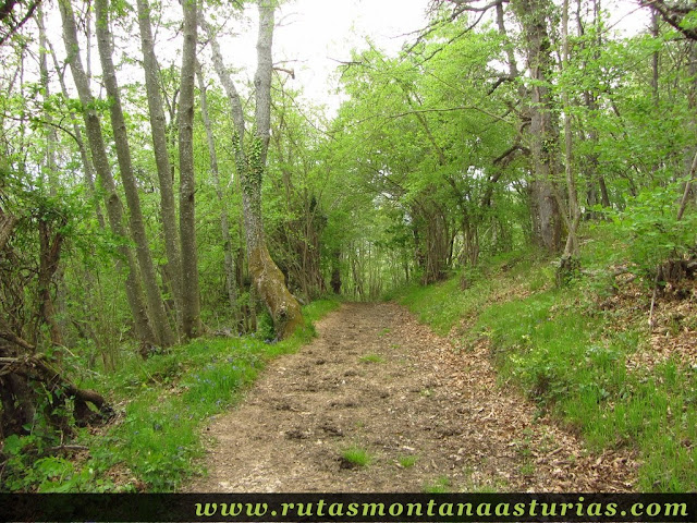 Bosque en Teverga