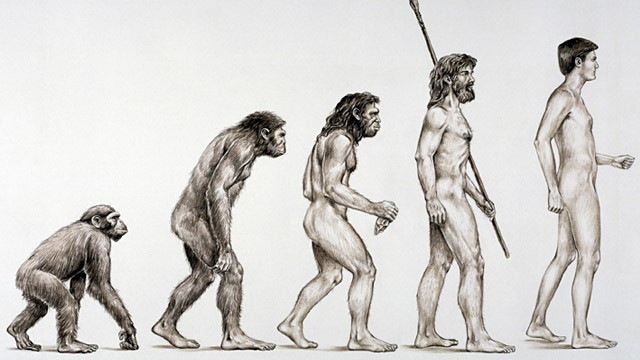 genetic relationship between apes and humans