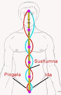 A három fő nádi az Ida, a Pingala és a Szusumna