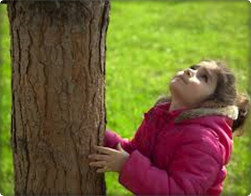 #PraCegoVer: Criança debaixo de uma árvore frondosa, segurando seu tronco observa sua altura com admiração.