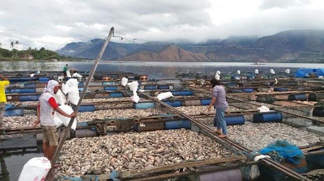 Bukan Karena Mistis! 180 Ton Ikan Tiba-Tiba Mati di Danau Toba, Ternyata Ini Penyebabnya