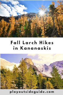 fantastic fall larch hikes in kananaskis - pin me!