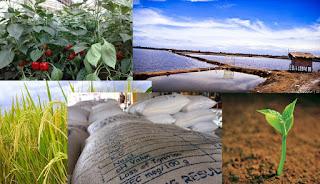 Zeolite dan Pertanian