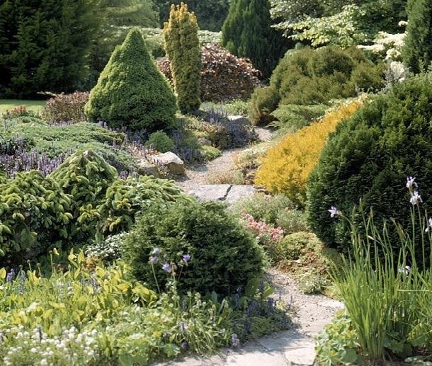 Хвойные и камни в дизайне сада