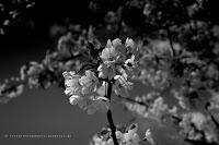 http://fineartfotografie.blogspot.de/2014/04/fruhlingsimpressionen-in-schwarzwei.html