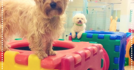 How Much Does Doggy Daycare Cost?