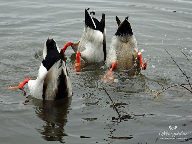 Three Ducks Photo
