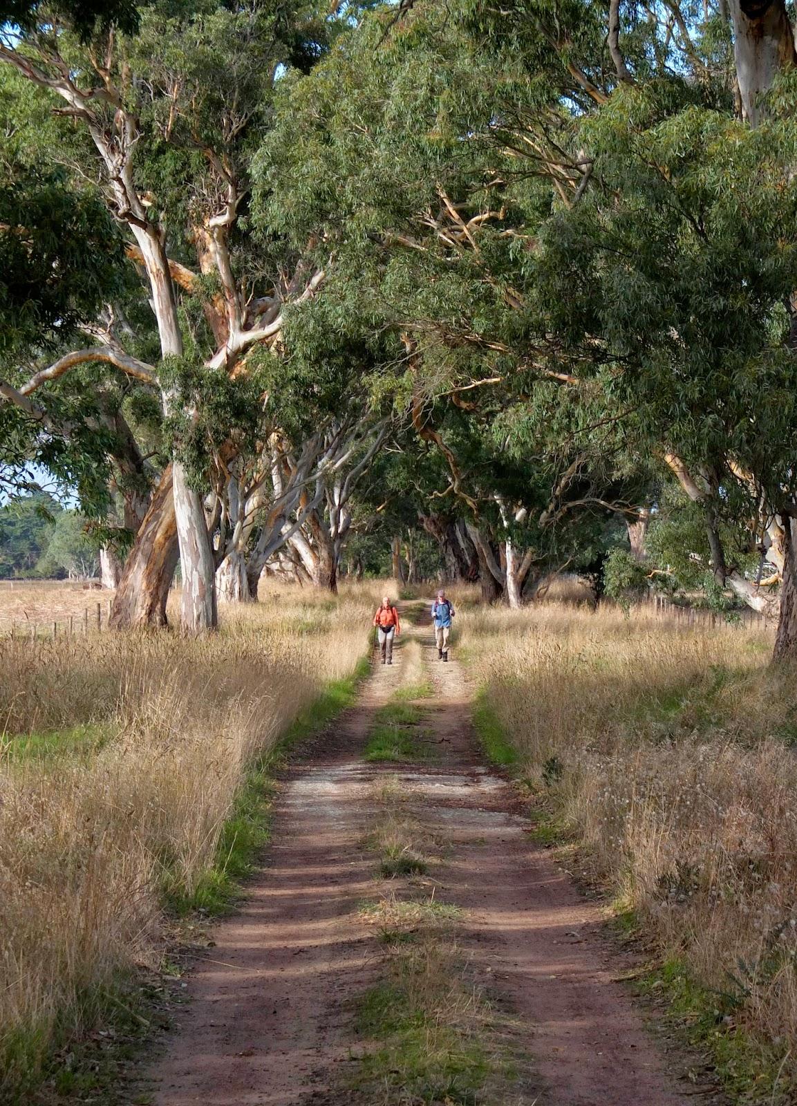 Camino Australia: Walking the Aussie Camino 2014