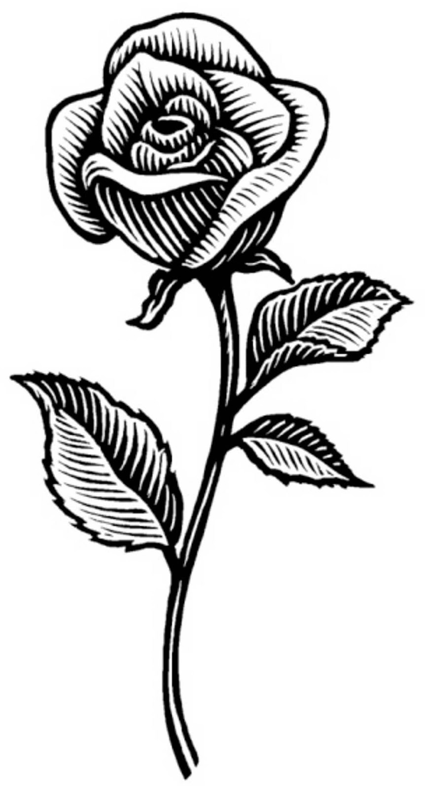 Rosas Para Dibujar Related Keywords - Rosas Para Dibujar ...