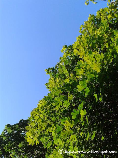 летние краски